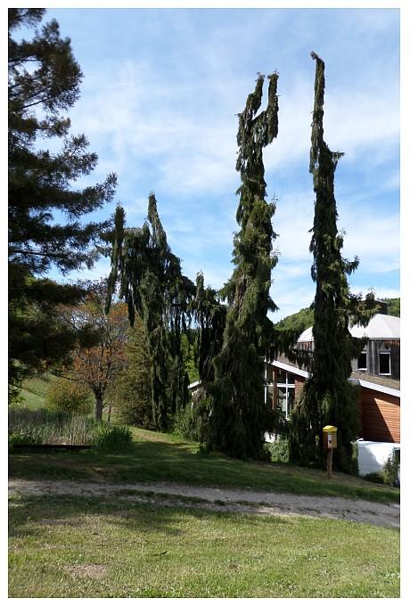 arboretum national suisse